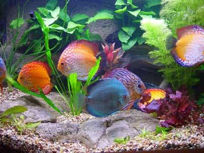 Российский аквариум и его обитатели