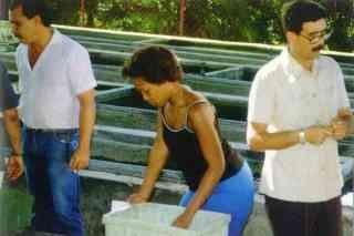 Фрагмент сортировки молоди живородящих рыб на рыборазводне (Куба)