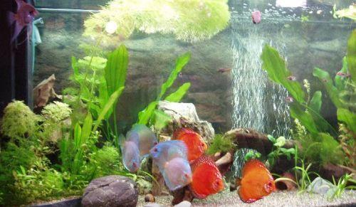 Большой аквариум своими руками