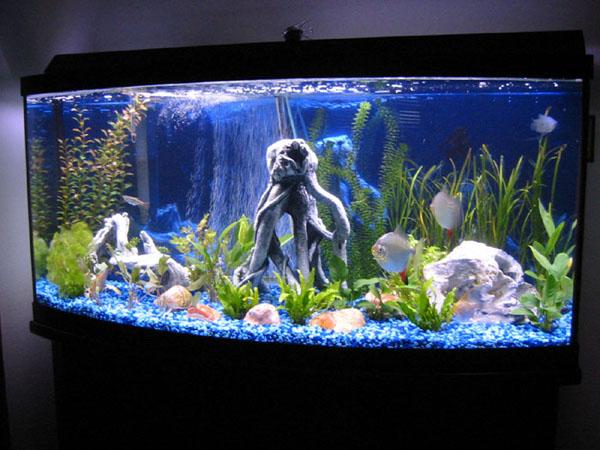 Название фото аквариумов